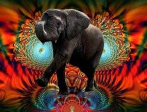 elefant_drogen